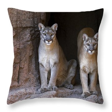 Throw Pillow featuring the photograph Mountain Lion 2 by Arterra Picture Library