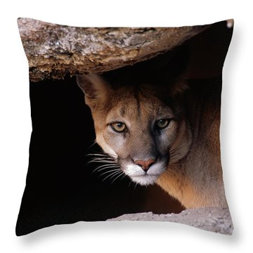 Mountain Lion Peering From Cave Throw Pillow