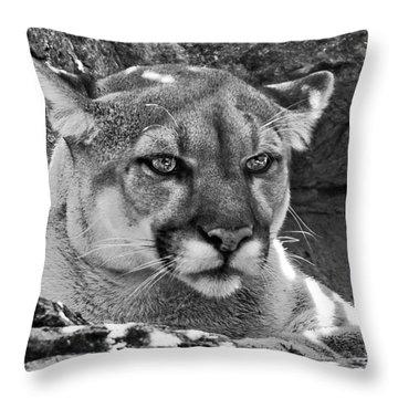 Mountain Lion Bergen County Zoo Throw Pillow