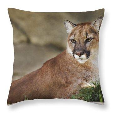 Mountain Lion  Throw Pillow by Brian Cross