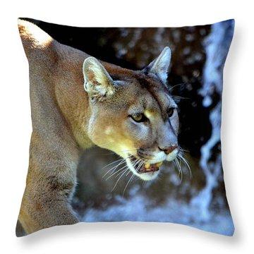 Mountain Lion Throw Pillow by Deena Stoddard