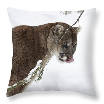 Mountain Lion In A Snow Covered Pine Forest Throw Pillow by Inspired Nature Photography Fine Art Photography