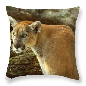 Throw Pillow featuring the photograph Mountian Lion by Donald Williams