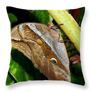 Throw Pillow featuring the photograph Mournful Owl Butterfly by Amy McDaniel