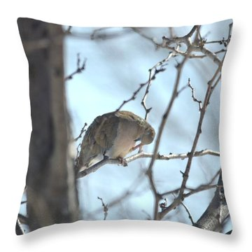 Throw Pillow featuring the photograph Mourning Dove by Dacia Doroff