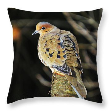 Mourning Dove On Post Throw Pillow by MTBobbins Photography