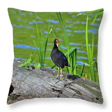 Mouthy Moorhen Throw Pillow by Al Powell Photography USA