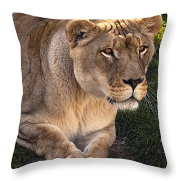 Moving In Throw Pillow by Steve Harrington