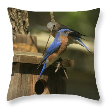 Mr. And Mrs. Bluebird Throw Pillow