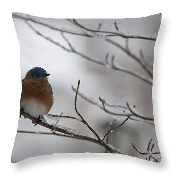 Mr Bluebird Throw Pillow by Teresa Mucha