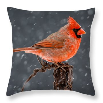 Mr. Cardinal Throw Pillow