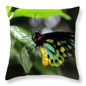 Throw Pillow featuring the photograph Mr. Cairns Birdwing by Mary Lou Chmura