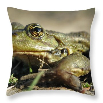 Throw Pillow featuring the photograph Mr. Charming Eyes. Side View by Ausra Huntington nee Paulauskaite