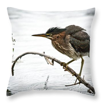 Mr. Green Heron Throw Pillow by Cheryl Baxter
