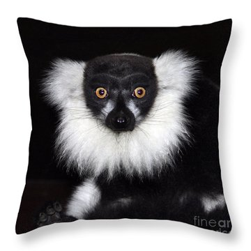 Throw Pillow featuring the photograph Mr Lemur by Terri Waters