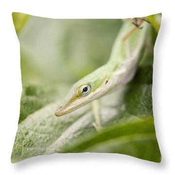 Mr Lizard Throw Pillow by Erin Johnson