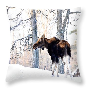 Mr. Moose Throw Pillow by Cheryl Baxter
