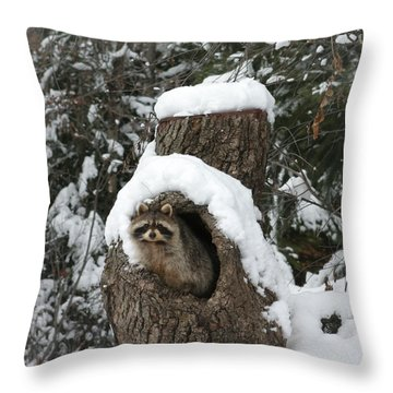 Mr. Raccoon Throw Pillow by Diane Bohna