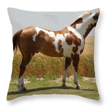 Mrparrmac - Right Side Throw Pillow by Cheryl Poland