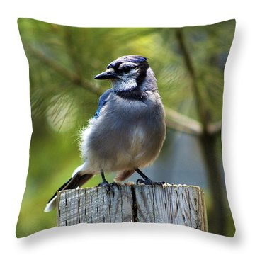 Mrs. Chatterbox Throw Pillow by Ron Haist