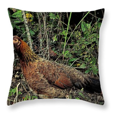 Ms. Chicken Throw Pillow by Maria Urso
