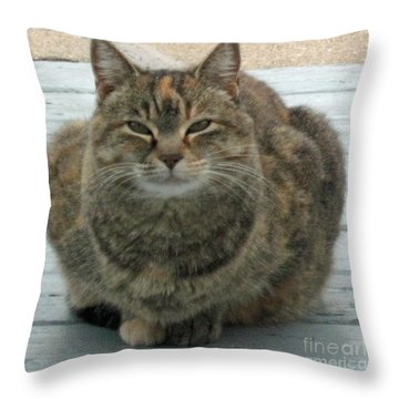 Muffin The Feral Cat Throw Pillow