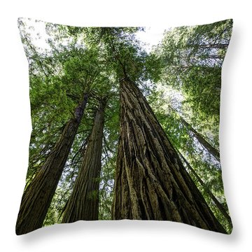 Muir Woods I Throw Pillow