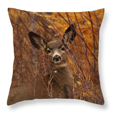 Mule Deer Doe Throw Pillow