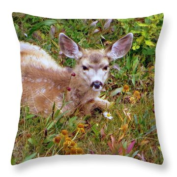 Mule Deer Fawn Throw Pillow