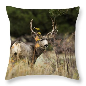 Mule Deer I Throw Pillow