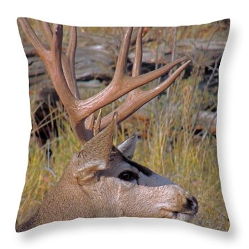 Throw Pillow featuring the photograph Mule Deer by Lynn Sprowl