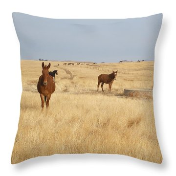 Mules In Gold Grass Throw Pillow