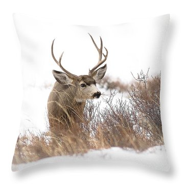 Muley Throw Pillow