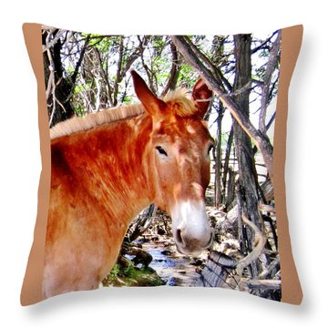 Throw Pillow featuring the photograph Muley by Marilyn Diaz