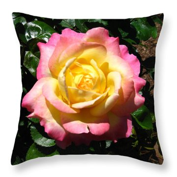 Multicolor Rose Throw Pillow by Bill Woodstock
