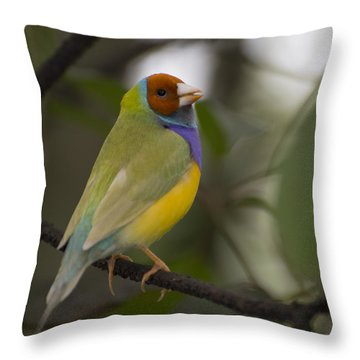 Multicolored Beauty Throw Pillow by Penny Lisowski