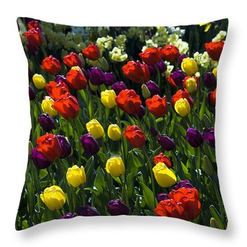 Colorful Tulip Field Throw Pillow