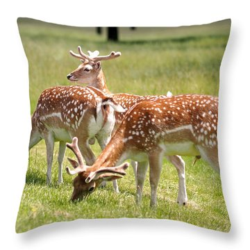 Throw Pillow featuring the photograph Multitasking Deer In Richmond Park by Rona Black