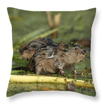 Throw Pillow featuring the photograph Munchkins by James Peterson