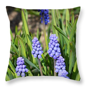 Muscari Armeniacum Throw Pillow by Felicia Tica