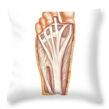 Atlas Of Human Anatomy Throw Pillows