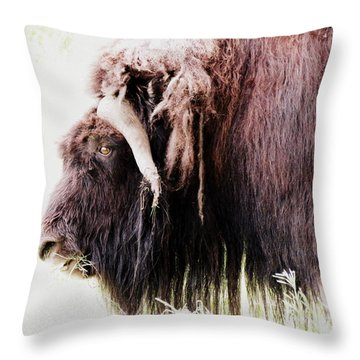 Muskox Throw Pillow