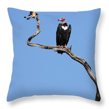 Mutual Admiration Throw Pillow by Fotosas Photography