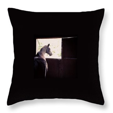 Pets Throw Pillows