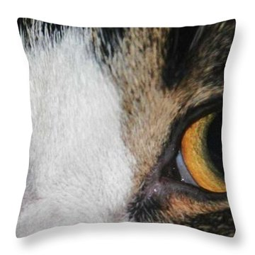 My Cat Is The Cat Of All Cats Throw Pillow by PainterArtist FIN
