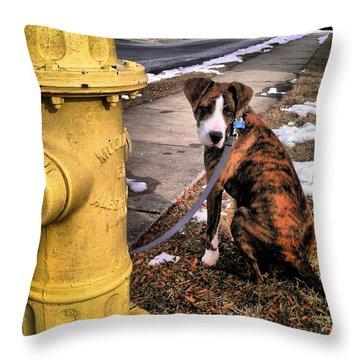 Throw Pillow featuring the photograph My Friend Plug by Robert McCubbin