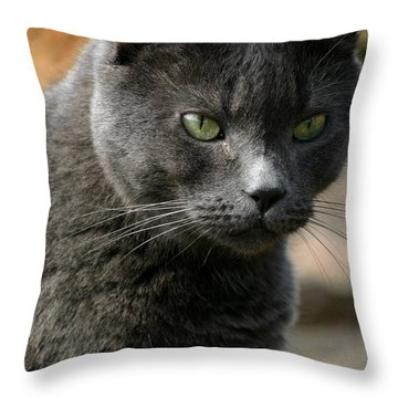 My Grey Cat Throw Pillow