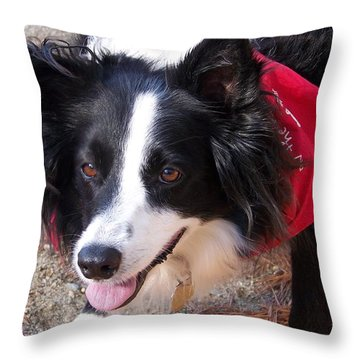 Female Border Collie Throw Pillow