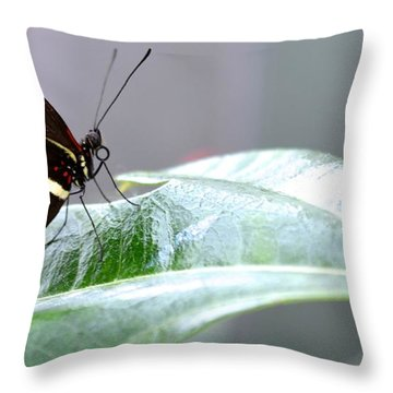 My Pretty Butterfly Throw Pillow by Carla Carson