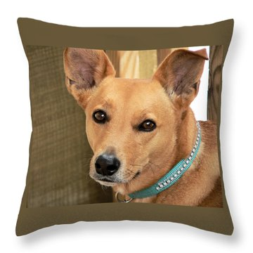 Dog - Cookie One Throw Pillow